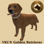 VKC_Golden_Retriever-marketplace_advert_01